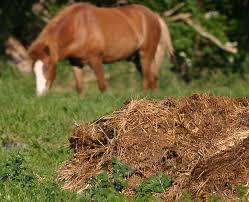 جالبترینبهره برداری ها از مدفوع حیوانات