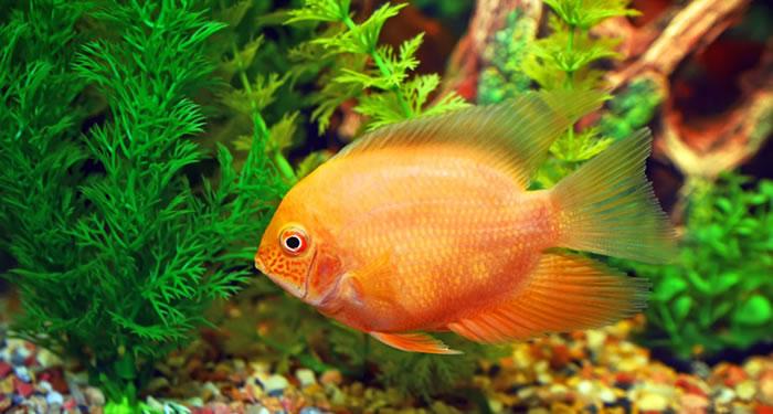 چگونه از پرورش ماهیان زینتی کسب درآمد کنیم