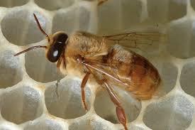 آموزش لوازم مورد نیاز جهت پرورش و تکثیر زنبور عسل