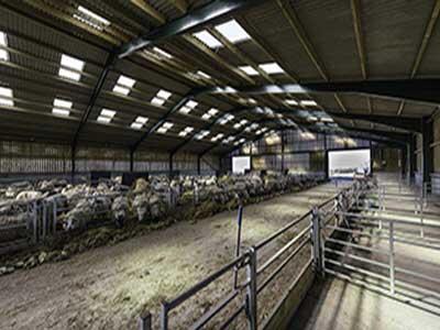 آموزش تعیین جایگاه مورد نیاز برای گوسفند پروری