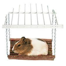 مدل اسباب بازی برای خوکچه هندی