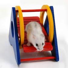 مدل اسباب بازی ساده برای خوکچه هندی