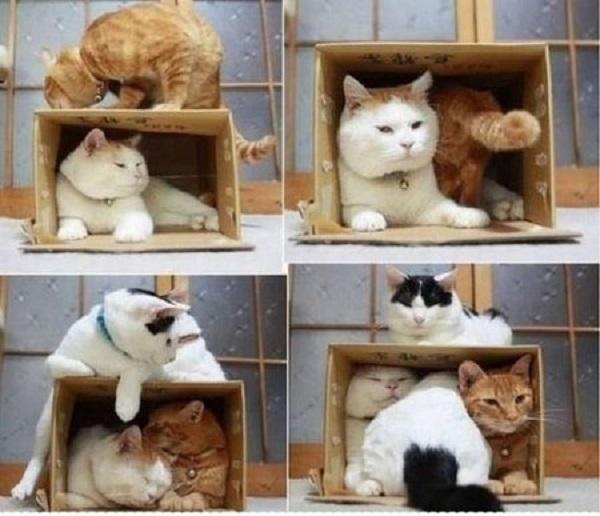 آموزش ساخت محل استراحت برای حیوانات خانگی