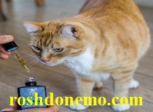 فواید استفاده از روغن زیتون برای گربه ها