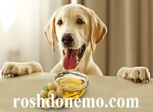 فواید استفاده از روغن زیتون برای سگ ها