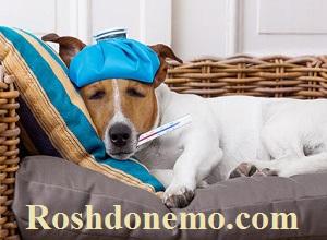 آموزش پائین آوردن تب سگ خانگی