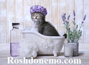 هر چند وقت یکبار گربه خانگی خودمان را بشوییم